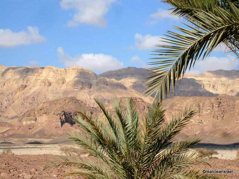 Palms, Mountains & Clouds, Timna Valley, Israel