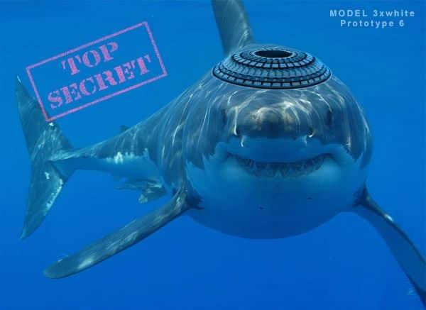 Zionist shark