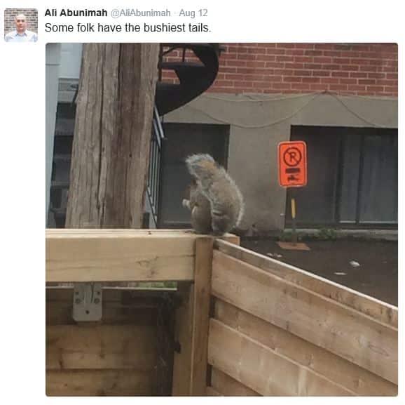 ali-possum