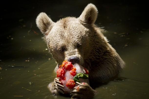 Israel bear