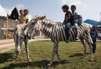 donkey zebras - Reuters