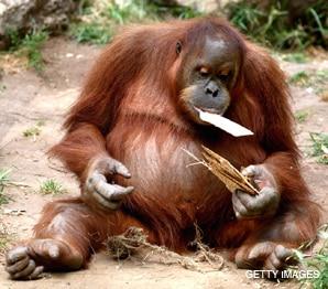 monkey matza