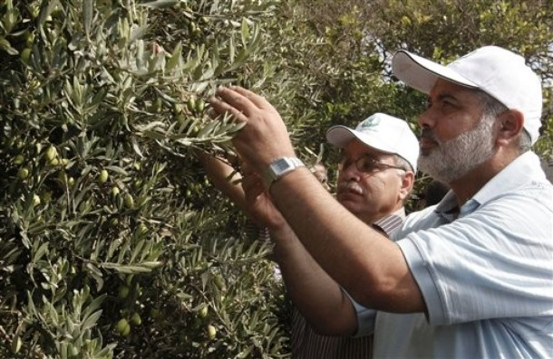 Ismail Haniyeh olive pick