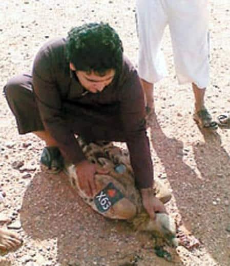 Zionist vulture
